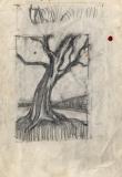 Hawthorn-tree-x-2-b