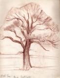 Oak-Tree-Near-Nuthall-1