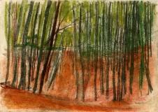 Beech-sapling-wood-pastel-1