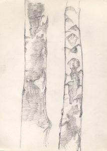 birches-close-up-pencil-study